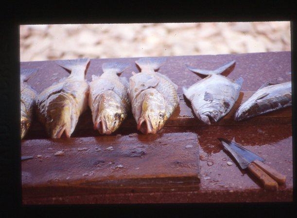 Fish Uru389